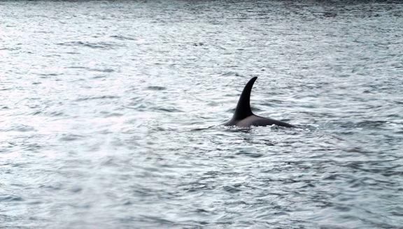 Kenai-Fjords-National-Park-boat-tour-dolphin