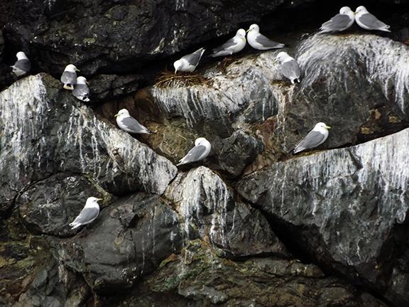Kenai-Fjords-National-Park-boat-tour-gulls