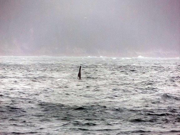 Kenai-Fjords-National-Park-boat-tour-whale-fin