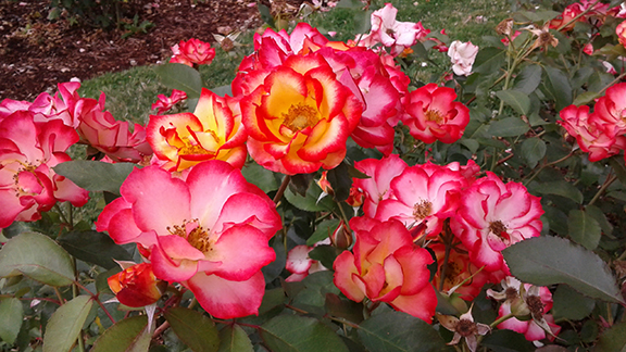 Ladd-Circle-Park-and-Rose-Garden-Portland10