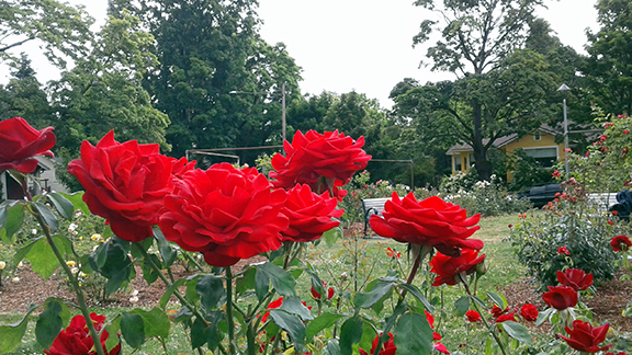 Ladd-Circle-Park-and-Rose-Garden-Portland12