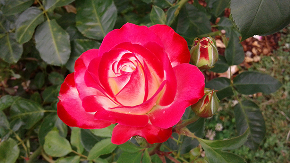 Ladd-Circle-Park-and-Rose-Garden-Portland5