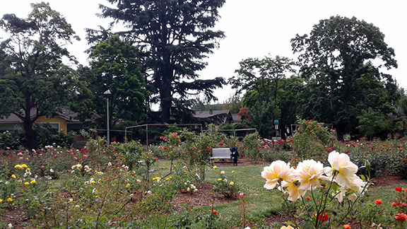 Ladd-Circle-Park-and-Rose-Garden-Portland8