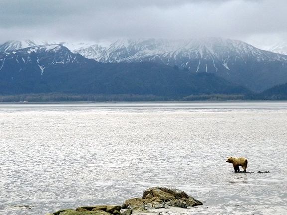 Lake-Clark-National Park-and-Preserve-bear-tour-view-from-Chinitna-Bay2
