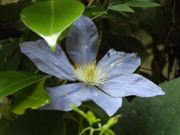 Leach-Botanical-Garden-Portland12