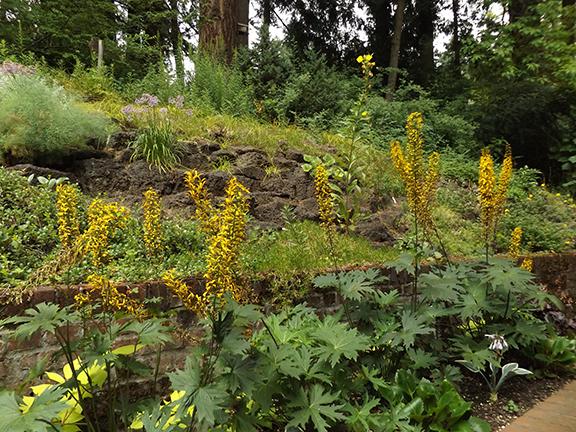 Leach-Botanical-Garden-Portland14