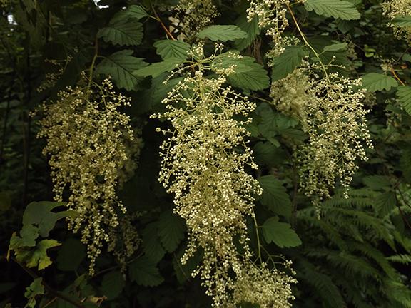 Leach-Botanical-Garden-Portland17