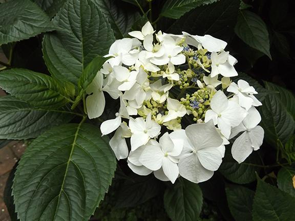 Leach-Botanical-Garden-Portland3