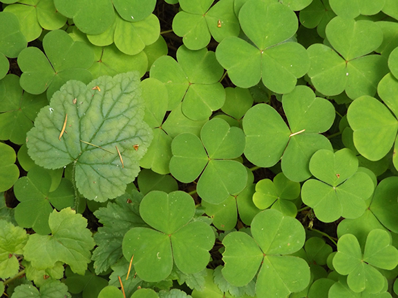 Leach-Botanical-Garden-Portland7