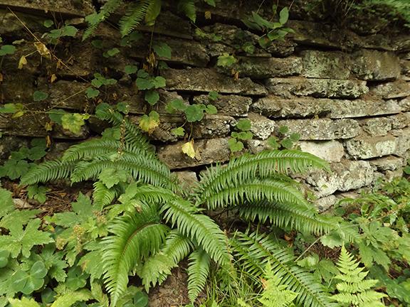 Leach-Botanical-Garden-Portland9
