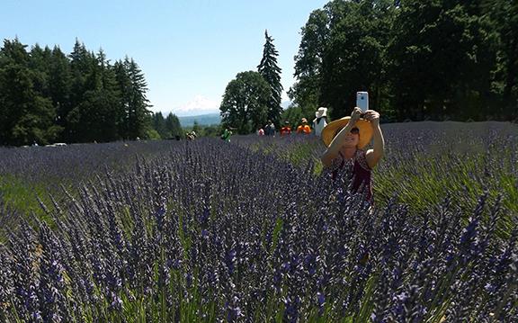 Oregon-Lavender-Farm-Oregon-City6