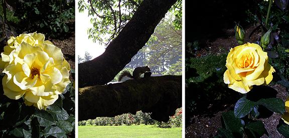 Owen-Rose-Garden-Eugene-Oregon10