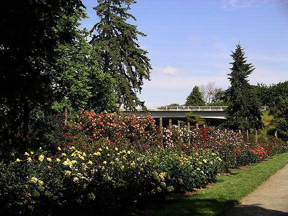 Owen-Rose-Garden-Eugene-Oregon4