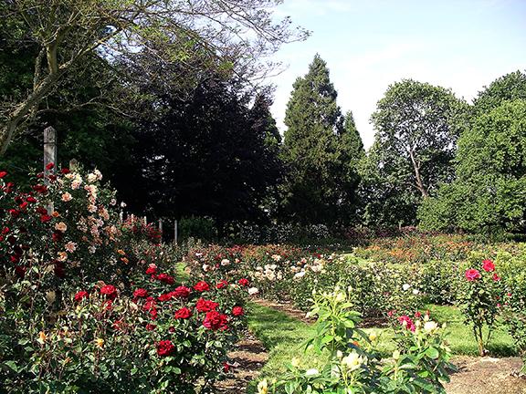 Owen-Rose-Garden-Eugene-Oregon7