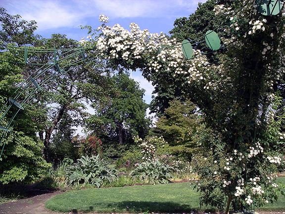 Owen-Rose-Garden-Eugene-Oregon9