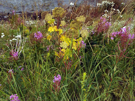 wildflowers-flight-from-Regal-Air-Anchorage-to-Katmai-National-Park-and-Preserve