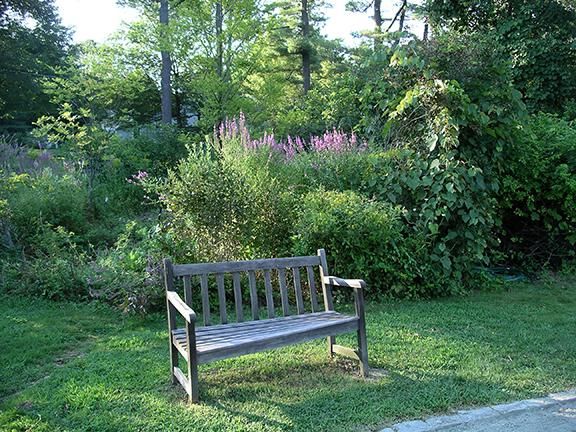 Acton-Arboretum-summer7
