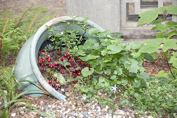 flower-pot-upper-garden-The-Grotto-Portland