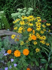 flowers-Acton-Arboretum-summer