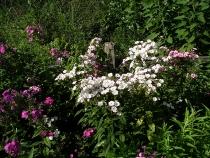 flowers-Acton-Arboretum-summer2