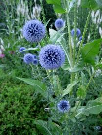 flowers-Acton-Arboretum-summer3