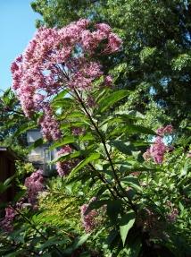 flowers-at-Bushs-Pasture-Park-Salem-Oregon