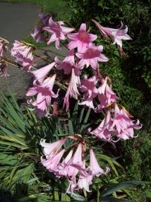 flowers-at-Bushs-Pasture-Park-Salem-Oregon2