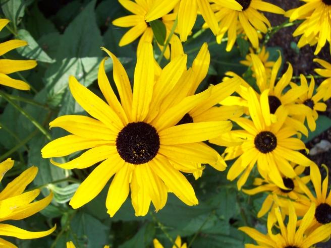 flowers-at-Bushs-Pasture-Park-Salem-Oregon3