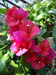 flowers-Bush-Conservatory-Salem-Oregon