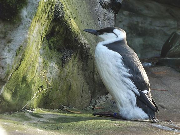 seabird-aviary-Oregon-Coast-Aquarium-Newport