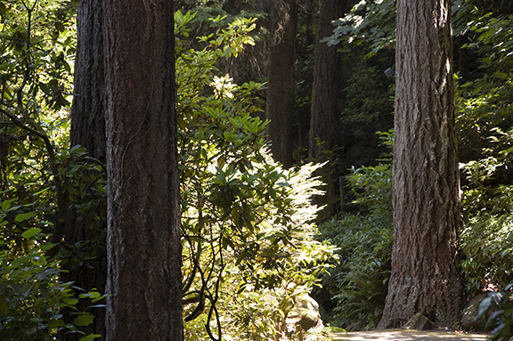 Trees-lower-garden-The-Grotto-Portland